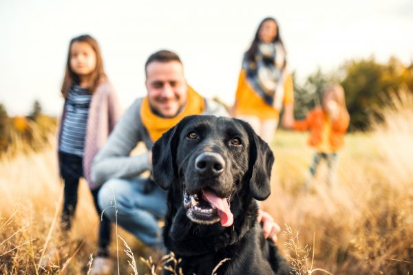 A young family with two small children and a black dog on a meadow in autumn nature.
